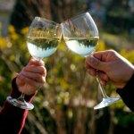 brindar vino