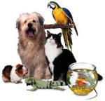 mascotas en domingo