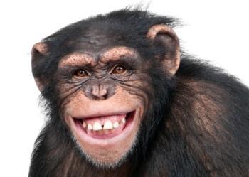 Resultado de imagen de mono sonriendo