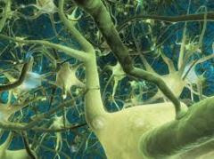 neurona selva