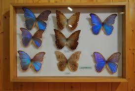 entomologia asturias