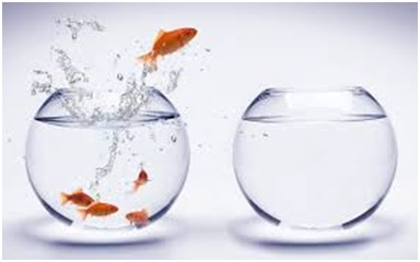 saltan peces