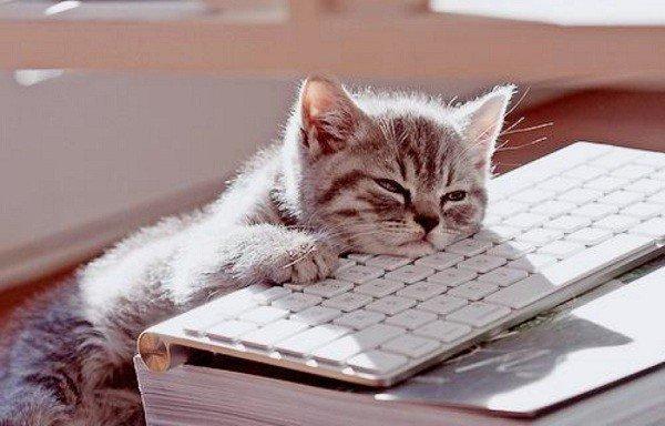 aburridos-gato