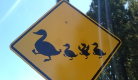 Duck-crossing-sign